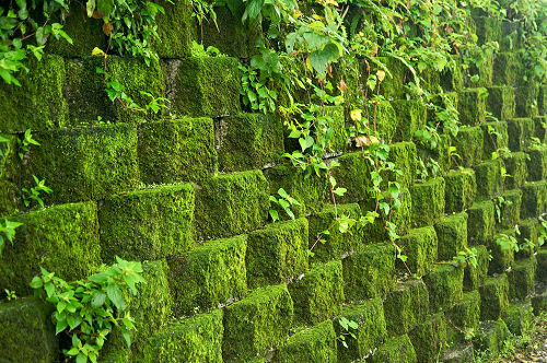 Make your retaining wall look better