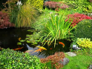 How to maintain and care for backyard ponds and water for Ornamental fish pond maintenance