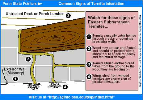 Common Signs Of Termite Infestation Old House Web