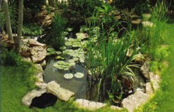 Water gardens instant oasis old house web for Koi pool thornton