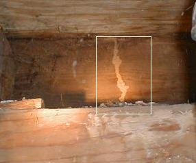 Termite Treatments Amp Prevention Tips Old House Web